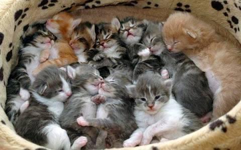 box_o_kittens1