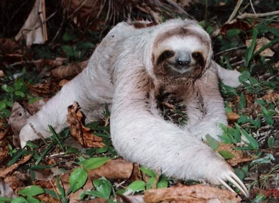 sloth Dog Clothes For Pitbulls