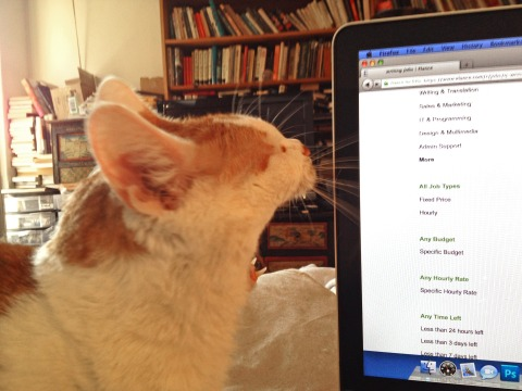 Fitzroy's opinion of  the freelancer's site Elance
