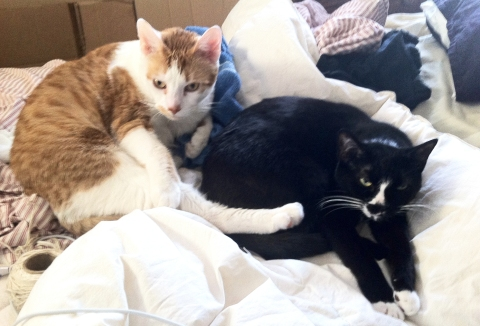bedcats